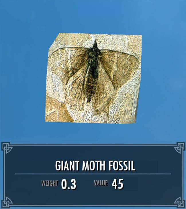 Giant Moth Fossil