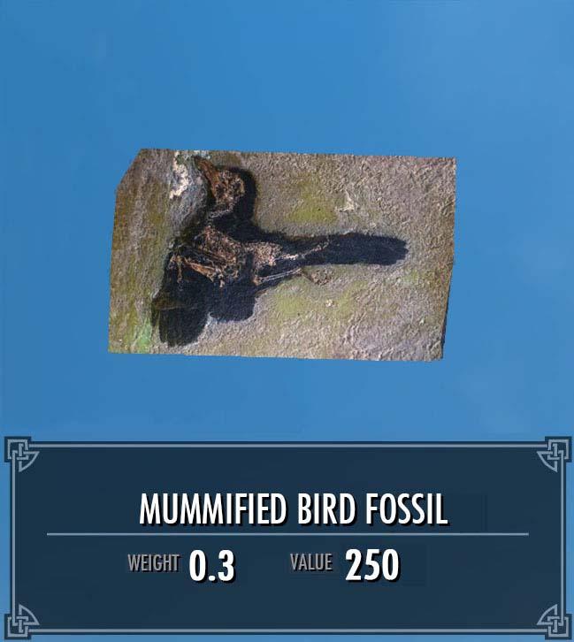 Mummified Bird Fossil