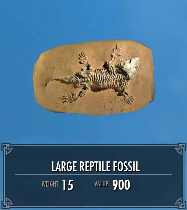 Large Reptile Fossil