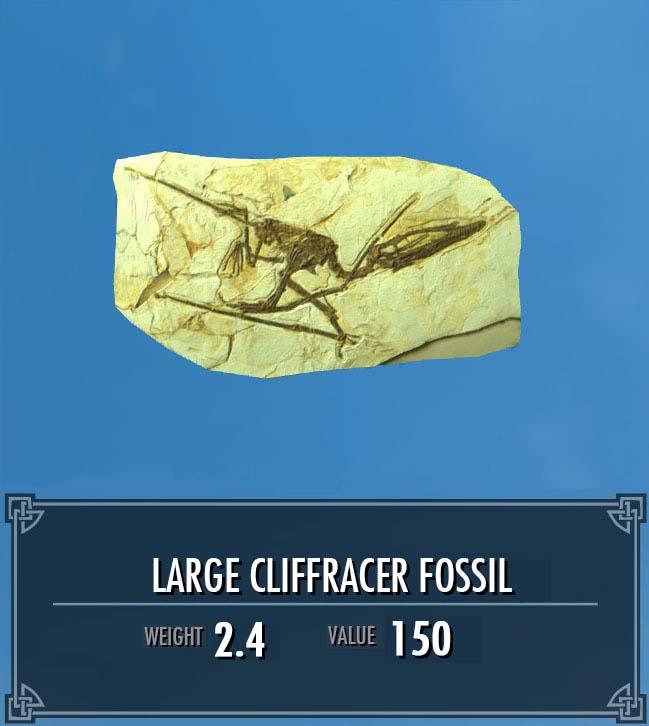 Large Cliffracer Fossil