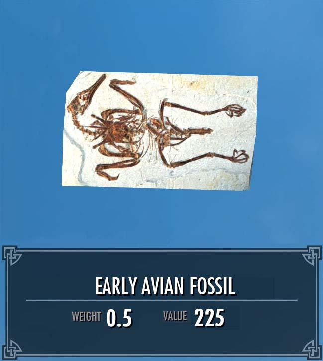 Early Avian Fossil