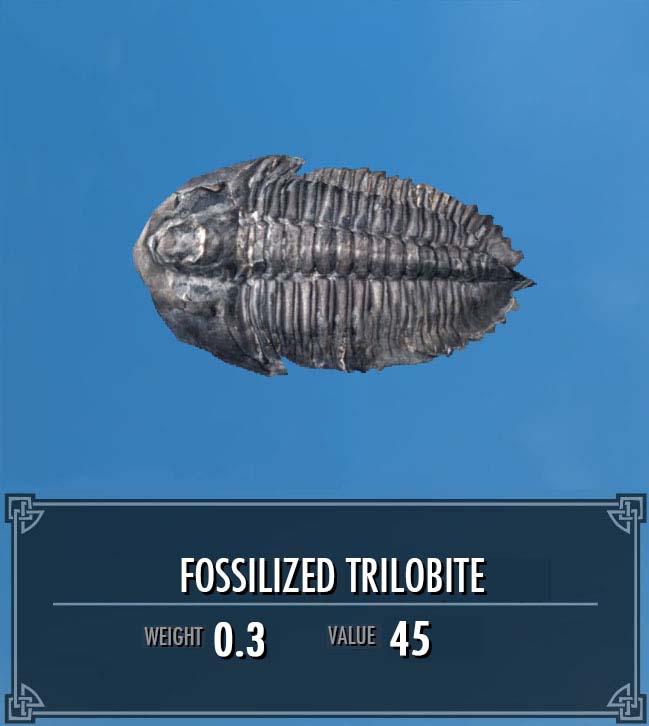 Fossilized Trilobite