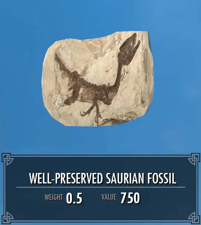 Well-Preserved Saurian Fossil