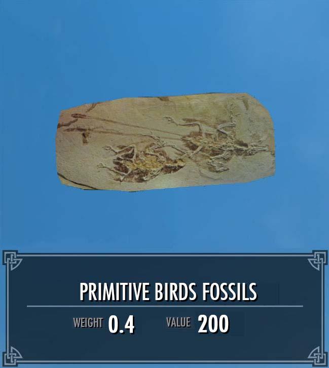 Primitive Birds Fossils