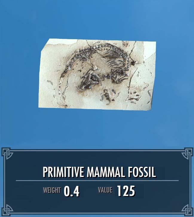 Primitive Mammal Fossil