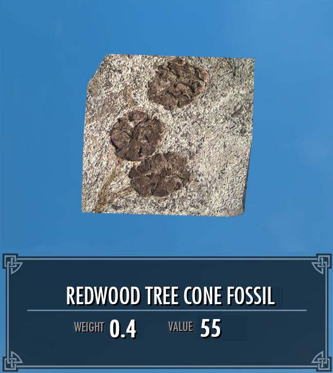 Redwood Tree Cone Fossil