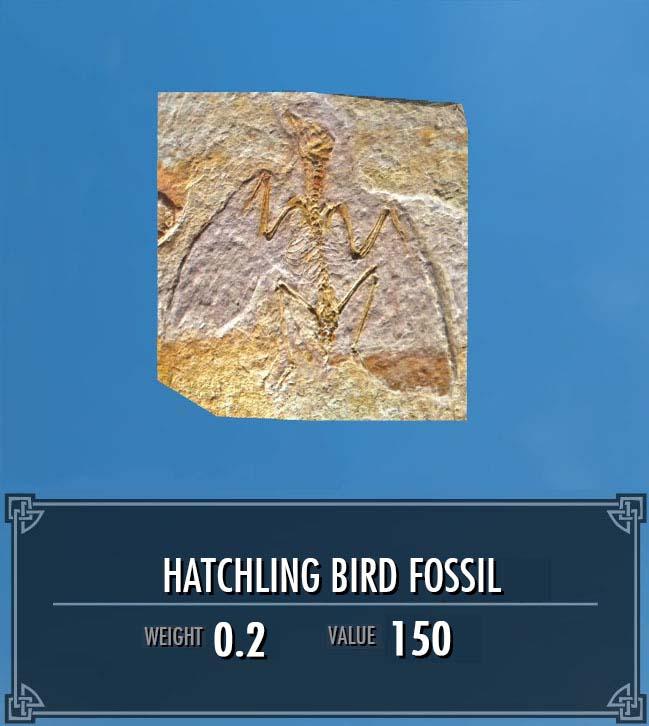 Hatchling Bird Fossil