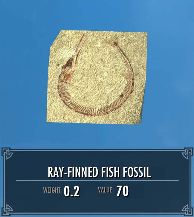 Ray-finned Fish Fossil