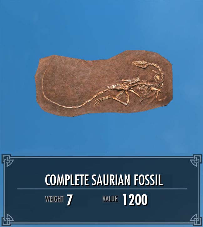 Complete Saurian Fossil