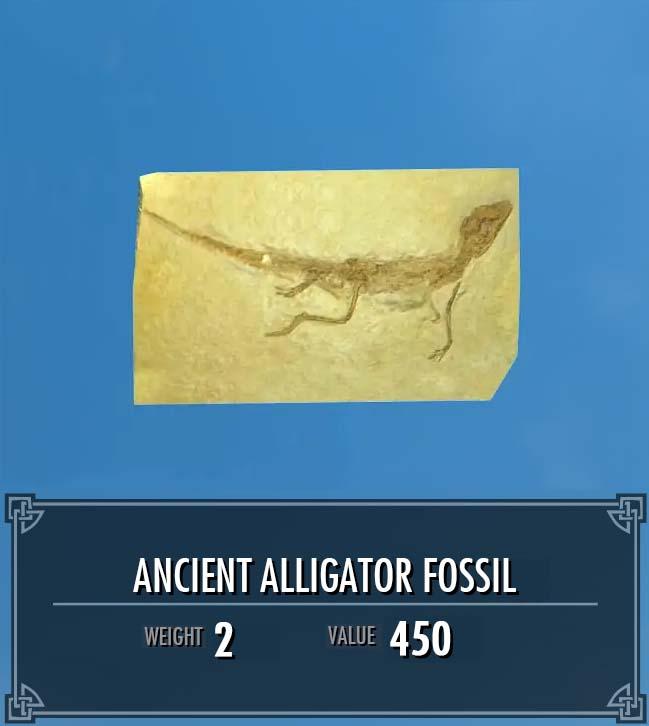 Ancient Alligator Fossil