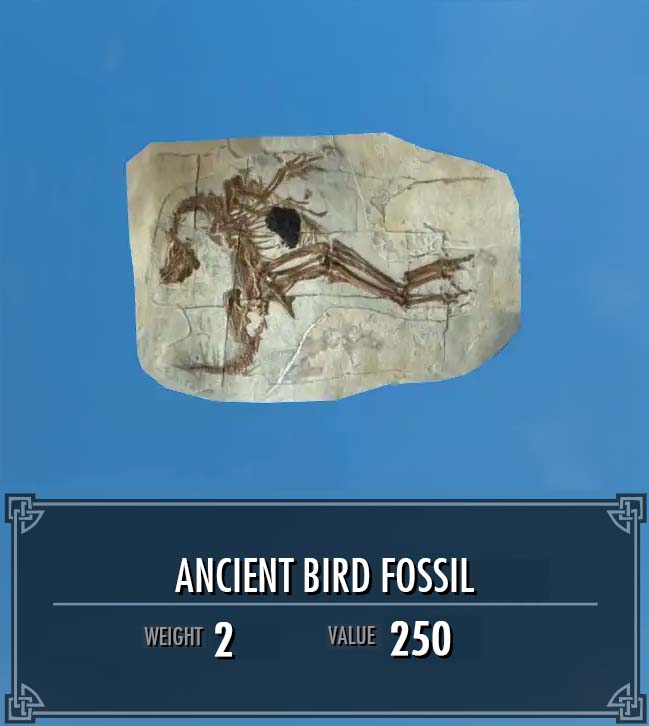 Ancient Bird Fossil