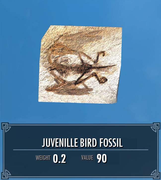 Juvenile Bird Fossil