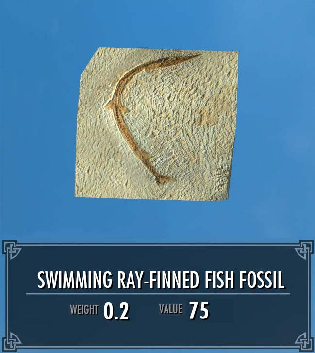 Swimming Ray-finned Fish Fossil