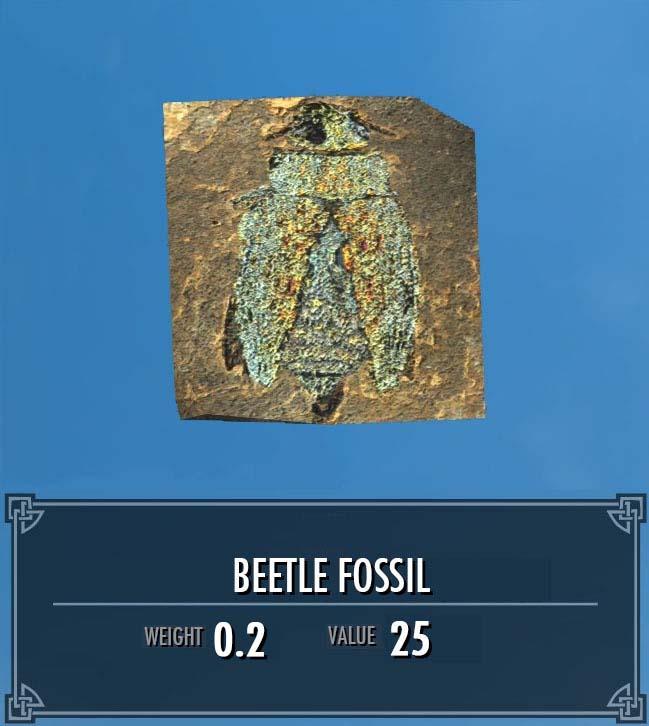 Beetle Fossil