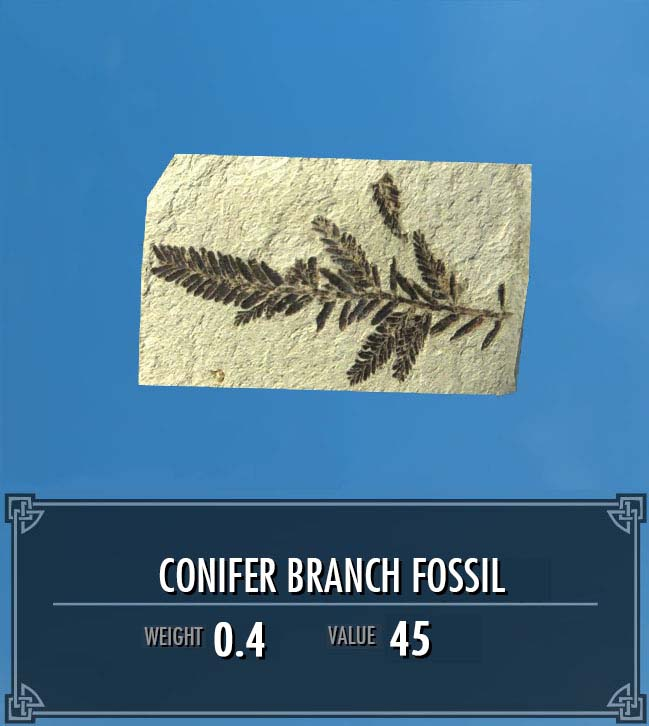 Conifer Branch Fossil