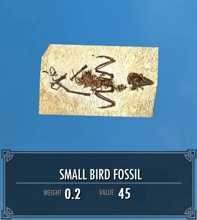 Small Bird Fossil