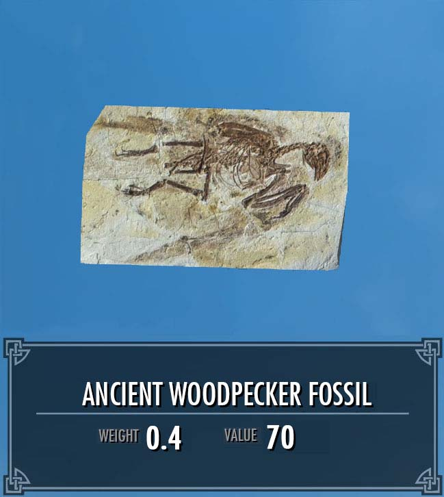 Ancient Woodpecker Fossil