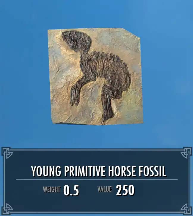 Young Primitive Horse Fossil