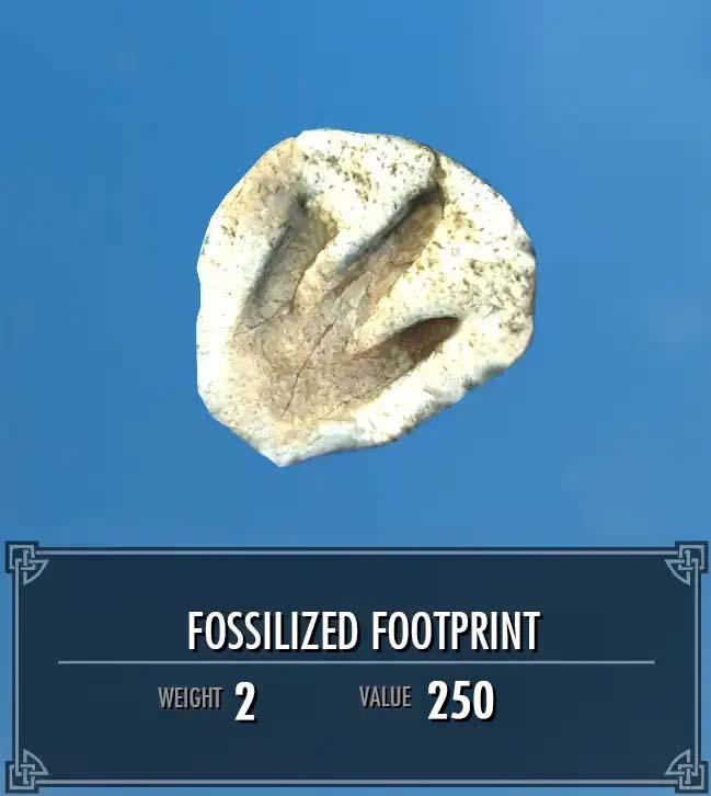 Fossilized Footprint