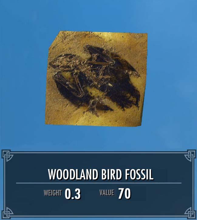 Woodland Bird Fossil