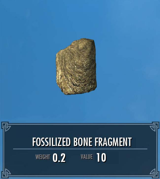 Fossilized Bone Fragment