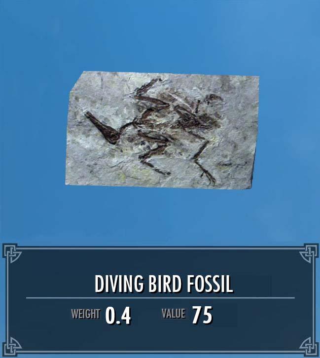 Diving Bird Fossil