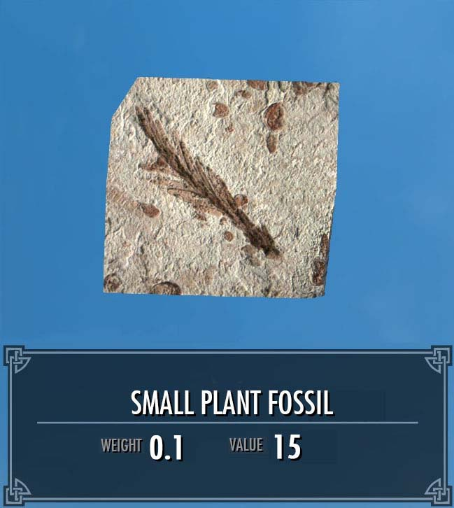 Small Plant Fossil