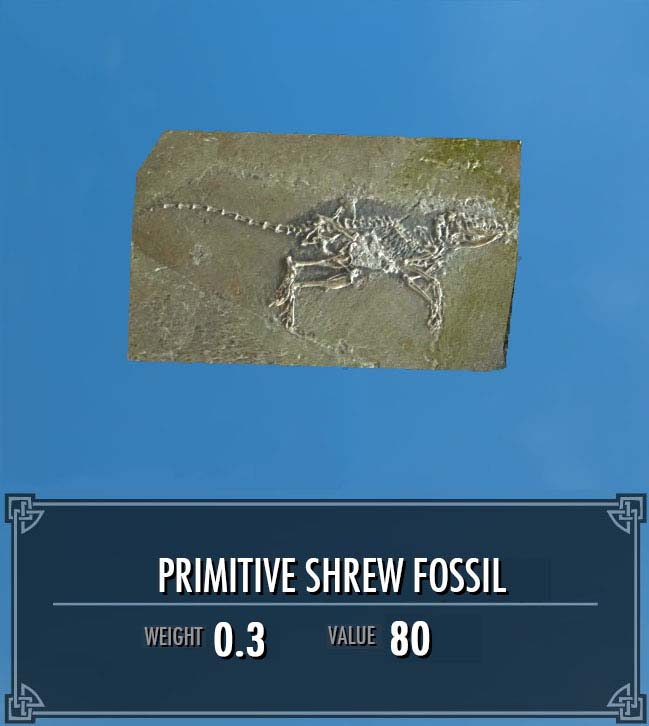 Primitive Shrew Fossil