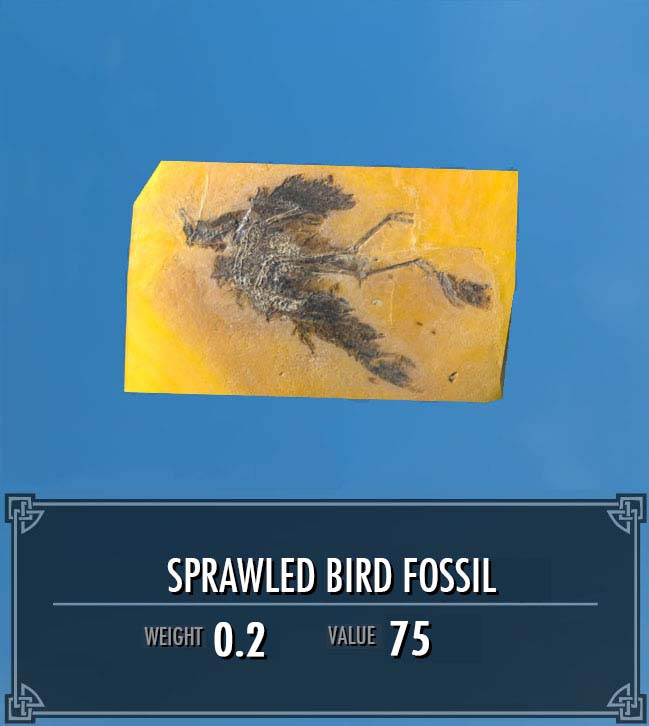 Sprawled Bird Fossil