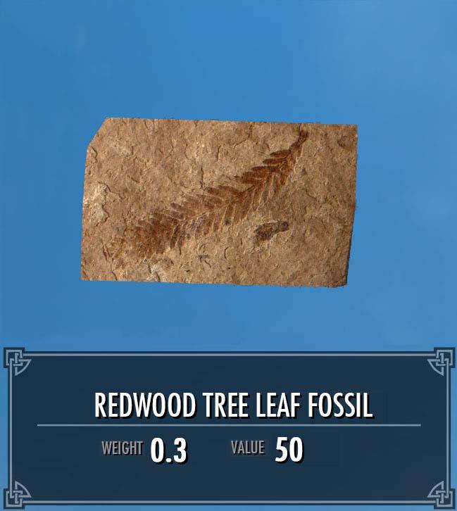Redwood Tree Leaf Fossil