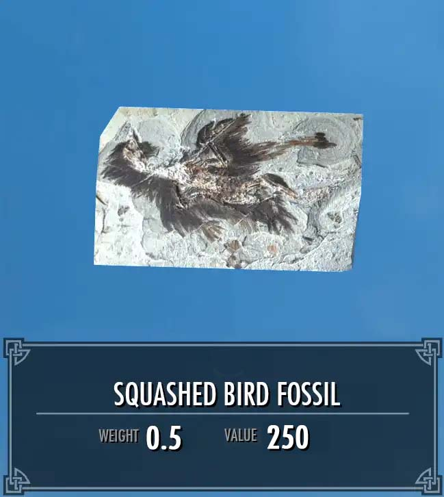 Squashed Bird Fossil