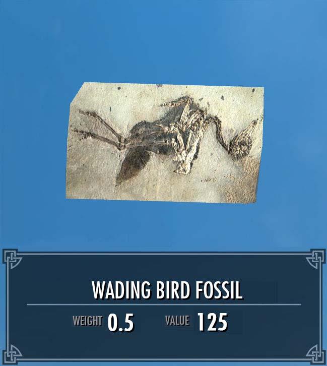 Wading Bird Fossil