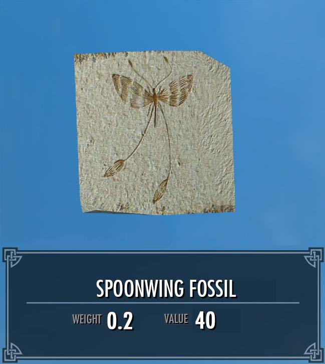 Spoonwing Fossil