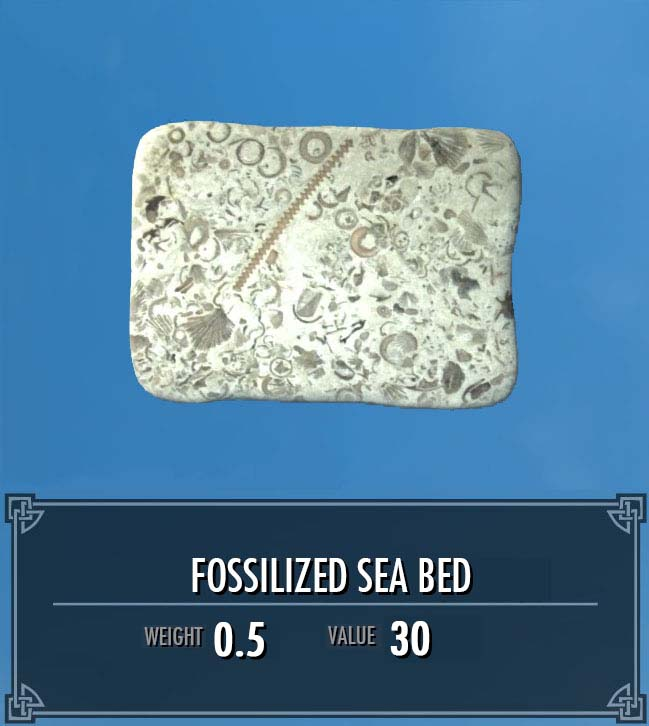Fossilized Sea Bed
