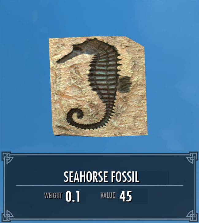 Seahorse Fossil