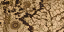 BO2-Texture-LC-Map2