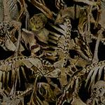 BO2-Texture-TC-DemonCocoon.png