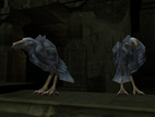 SR2-Animals-Crows