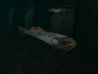 SR2-Animals-Fishes