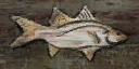 BO2-Texture-SD-FishSign.png