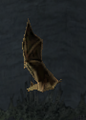 BO2-Animals-Bat-Canyons-side.png