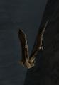 BO2-Animals-Bat-Canyons-front.png