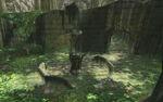 TP Sacred Grove 04.jpg