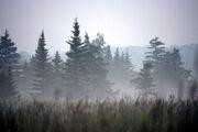 Freeland mist