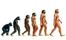 Human Evolution.jpg