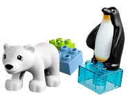 10501 Les animaux polaires du zoo 2
