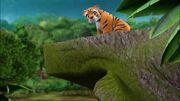 Tigresse pont-À la recherche du futur marié.jpg
