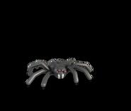 Araignée HEROICA