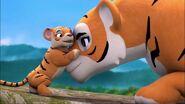 Tigres-À la recherche du futur marié