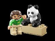 6173 Le panda 3